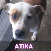 Les adultes de taille moyenne en Roumanie en un clin d'oeil Atika10