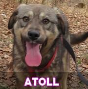 Les adultes de taille moyenne en Roumanie en un clin d'oeil Atoll18