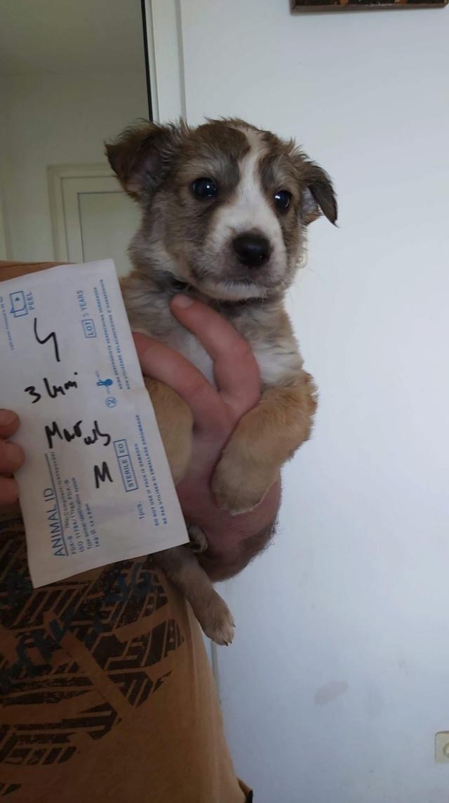 ORSO (ex AUGUST) - chiot mâle, de taille moyenne à l'âge adulte, né environ en février 2020 - Adopté par Marion (42)  August27