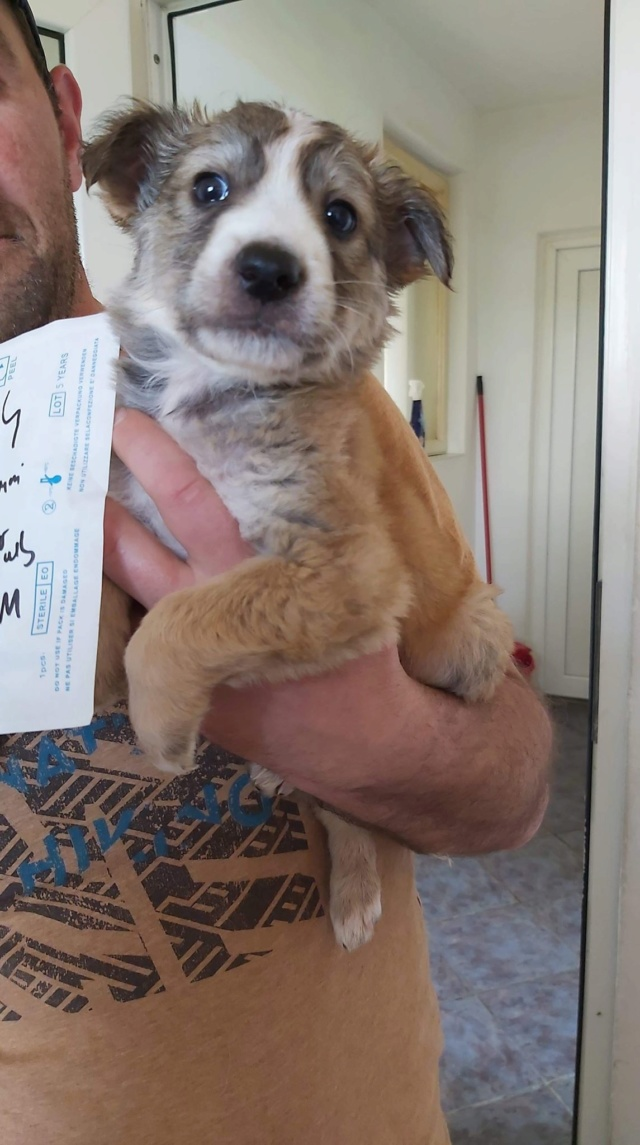 ORSO (ex AUGUST) - chiot mâle, de taille moyenne à l'âge adulte, né environ en février 2020 - Adopté par Marion (42)  August31