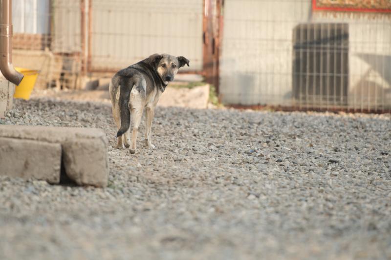 AURA - femelle de taille moyenne, née en 2012 (PASCANI) - REMEMBER ME LAND Aura10