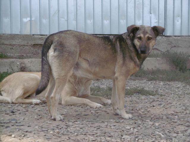 AURA - femelle de taille moyenne, née en 2012 (PASCANI) - REMEMBER ME LAND - Page 2 Aura_311
