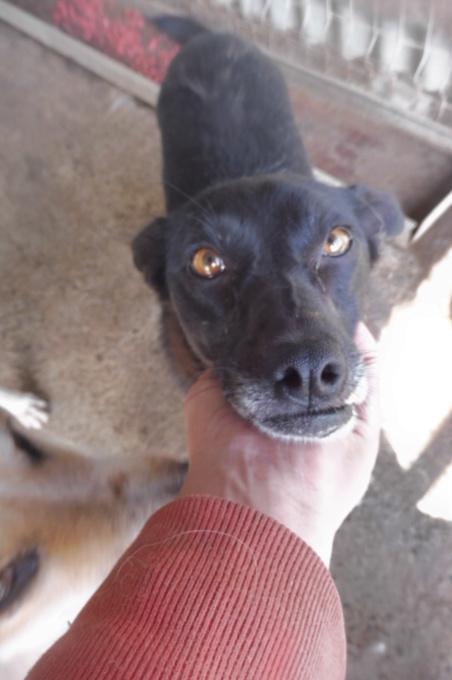 AISHA - femelle croisée de taille petite à moyenne, née environ en mars 2014 - (PASCANI) - REMEMBER ME LAND - Adoptée par Eva (13) Azcsha13