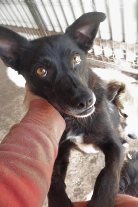 AISHA - femelle croisée de taille petite à moyenne, née environ en mars 2014 - (PASCANI) - REMEMBER ME LAND - Adoptée par Eva (13) Azcsha14