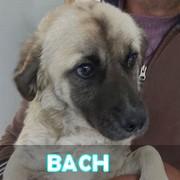 Les adultes de petite taille en Roumanie en un clin d'oeil Bach10
