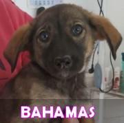 Les chiots en roumanie en un clin d'oeil  Bahama12