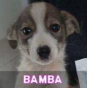 Les chiots en roumanie en un clin d'oeil  Bamba11