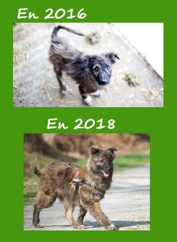 BAMBOU, chiot mâle, né en août 2015, au refuge d'Anda et d'Alina - Adopté par Christine (35) - décédé - Page 5 Bamboo10