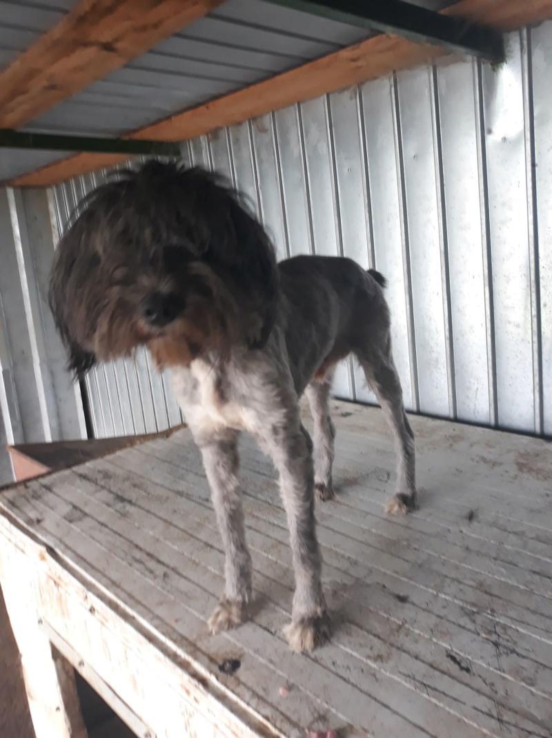 BARBOUILLE - mâle croisé à poils longs de taille moyenne, né en 2015 (PASCANI) - REMEMBER ME LAND - ADOPTE PAR JEANINE (71) - Page 2 Barbou11
