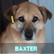 Association Remember Me France : sauver et adopter un chien roumain Baxter36