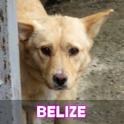 Les chiots en roumanie en un clin d'oeil  Belize18