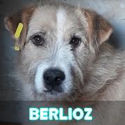 Association Remember Me France : sauver et adopter un chien roumain Berlio13