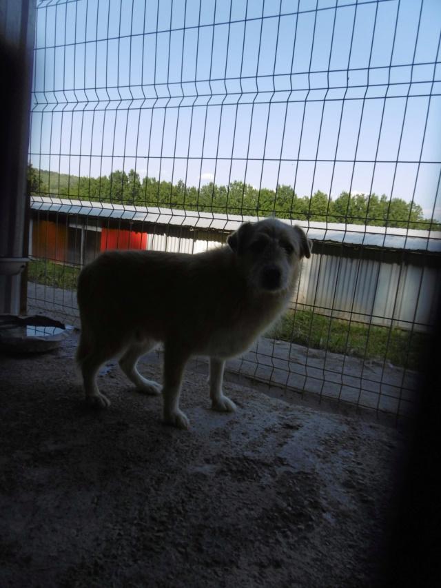 BERLIOZ - PLUS DE 4 ANS DE box !! mâle croisé de taille moyenne, né environ en juin 2011 ( PASCANI ) - REMEMBER ME LAND - Adopté par Marylene (28)  - Page 7 Berlio14
