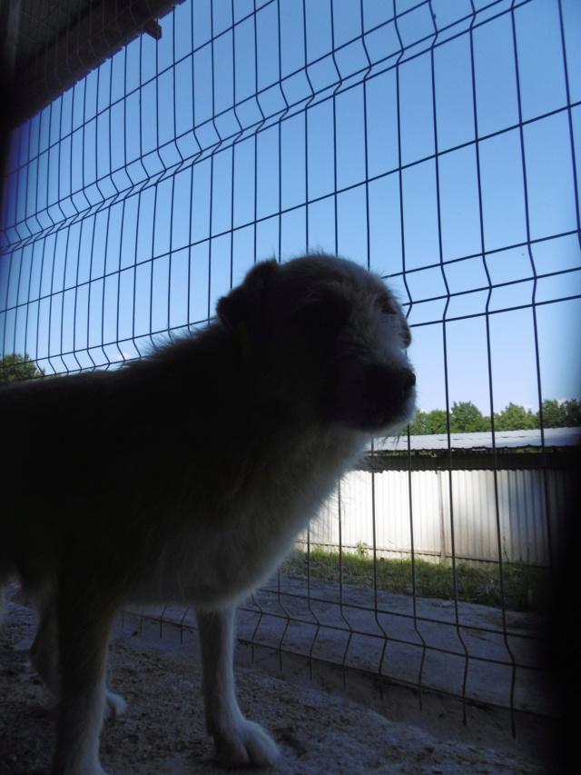 BERLIOZ - PLUS DE 4 ANS DE box !! mâle croisé de taille moyenne, né environ en juin 2011 ( PASCANI ) - REMEMBER ME LAND - Adopté par Marylene (28)  - Page 7 Berlio16