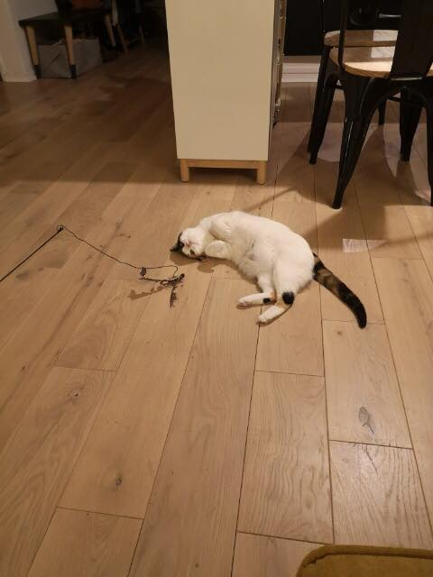 BICKY (ex NASKA) - chaton femelle, née environ novembre 2017 - adoptée par Lorène et Julien (75) Bicky10
