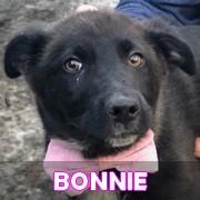 Les chiots en roumanie en un clin d'oeil  Bonnie18