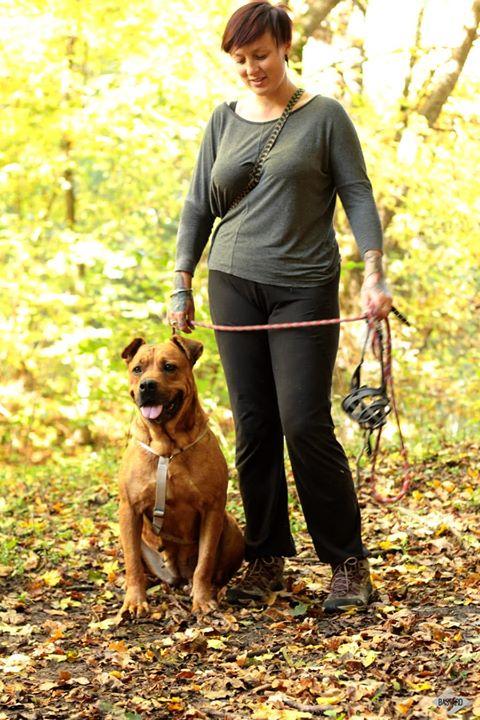 BRITNEY - femelle croisée Dogue de Bordeaux - grande taille -  née en 2011 - REMEMBER ME LAND Britne38