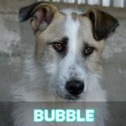 Les adultes de taille moyenne en Roumanie en un clin d'oeil Bubble35