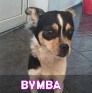 Les adultes de petite taille en Roumanie en un clin d'oeil Bymba11