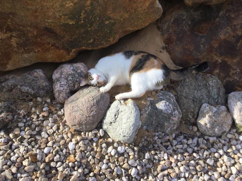 CALICE (ex KAÏNA) - chat femelle, née en fin juillet 2017 - En FA chez Abysse (depart92) - ADOPTEE PAR LAURE (95) - Page 2 Calice15