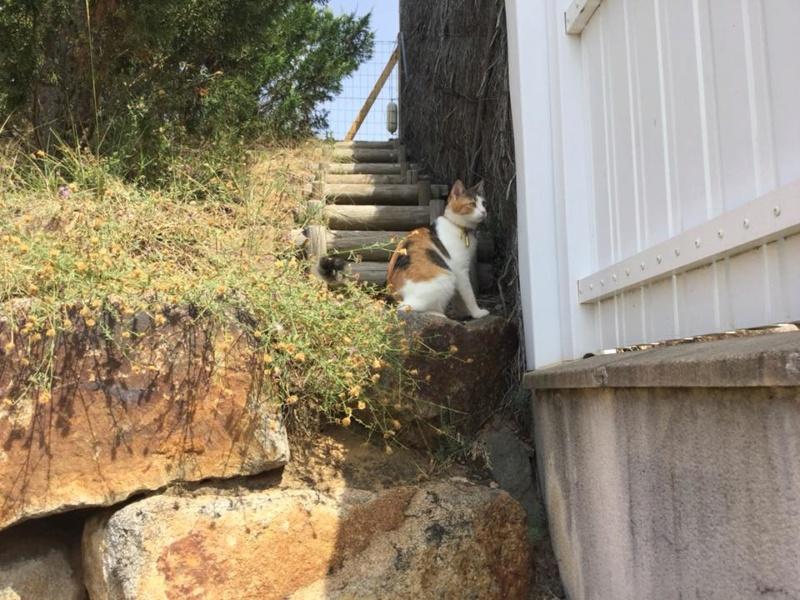 CALICE (ex KAÏNA) - chat femelle, née en fin juillet 2017 - En FA chez Abysse (depart92) - ADOPTEE PAR LAURE (95) - Page 2 Calice17