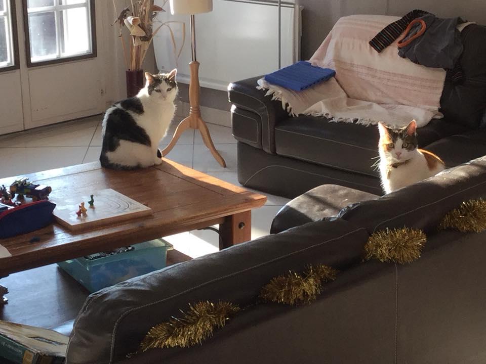 CALICE (ex KAÏNA) - chat femelle, née en fin juillet 2017 - En FA chez Abysse (depart92) - ADOPTEE PAR LAURE (95) - Page 3 Calice33