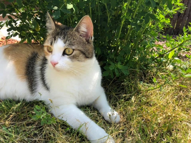 CALICE (ex KAÏNA) - chat femelle, née en fin juillet 2017 - En FA chez Abysse (depart92) - ADOPTEE PAR LAURE (95) - Page 3 Calice38