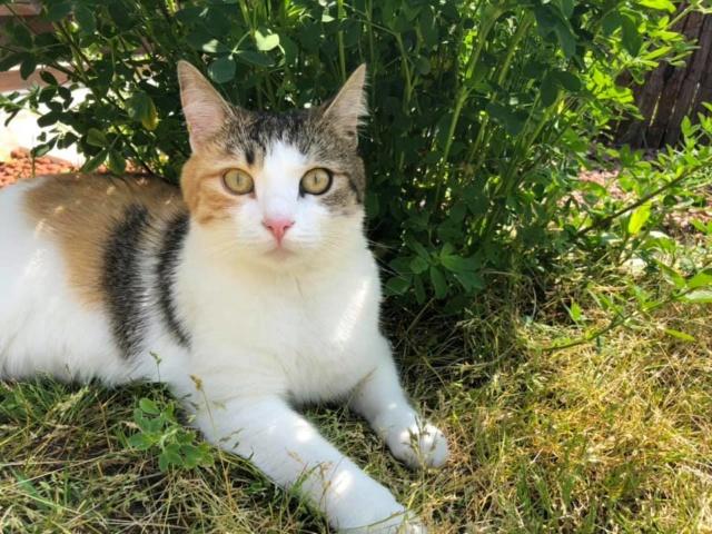 CALICE (ex KAÏNA) - chat femelle, née en fin juillet 2017 - En FA chez Abysse (depart92) - ADOPTEE PAR LAURE (95) - Page 3 Calice39