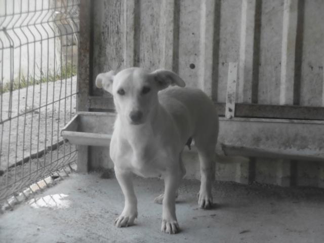 CASABLANCA - femelle croisée, taille petite à moyenne, âge à venir - REMEMBER ME LAND Casabl14