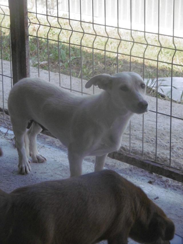 CASABLANCA - femelle croisée, taille petite à moyenne, née environ janvier 2017 - REMEMBER ME LAND Casabl17