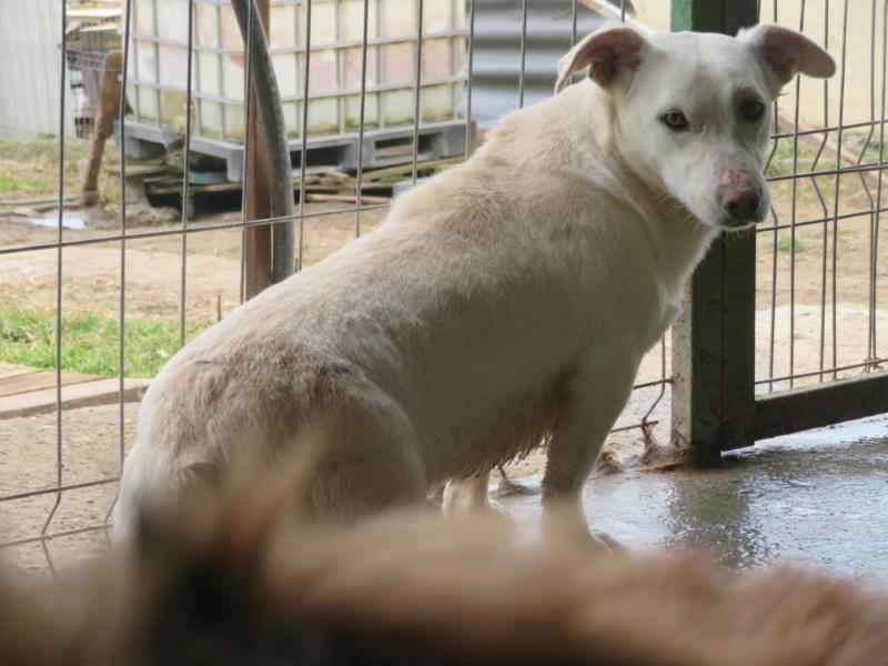 CASABLANCA - femelle croisée, taille petite à moyenne, née environ janvier 2017 - REMEMBER ME LAND Casabl30