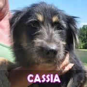 Les adultes de petite taille en Roumanie en un clin d'oeil Cassia10