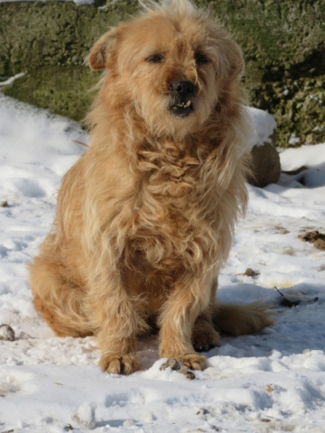 CHOPIN - Mâle, croisé cairn terrier, de petite taille - né environ en 2009 - REMEMBER ME LAND Chopin43