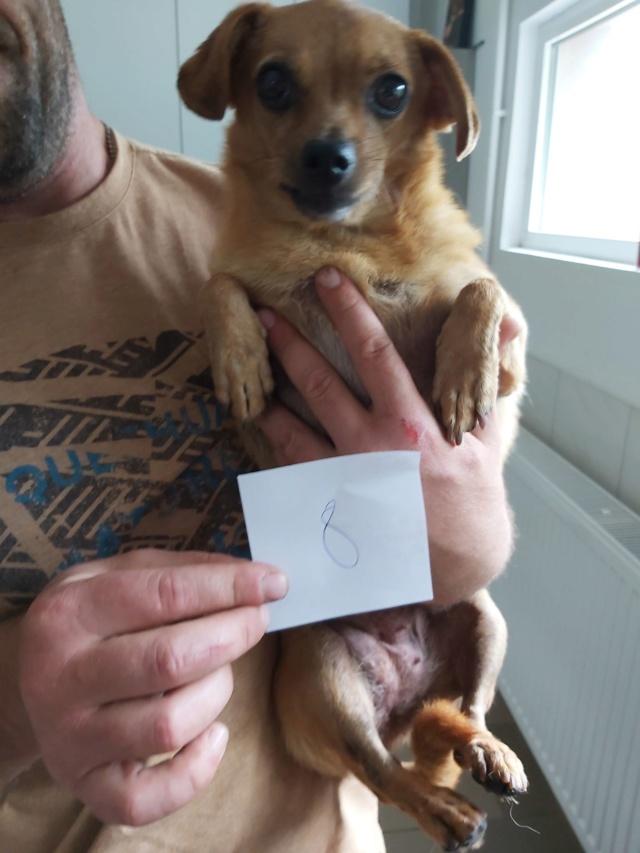 CLARINETTE - Femelle croisée pinscher, de petite taille (mini 5kg) - née environ en septembre 2012 - Adoptée par Brigitte (55)  Clarin10