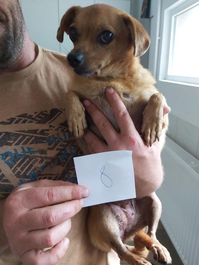 CLARINETTE - Femelle croisée pinscher, de petite taille (mini 5kg) - née environ en septembre 2012 - Adoptée par Brigitte (55)  Clarin12