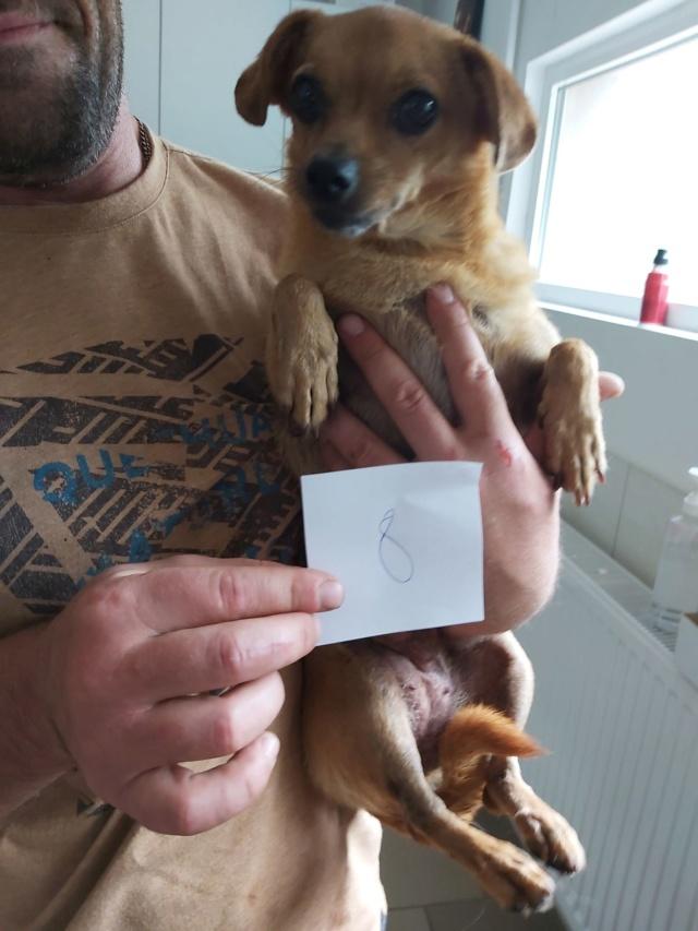 CLARINETTE - Femelle croisée pinscher, de petite taille (mini 5kg) - née environ en septembre 2012 - Adoptée par Brigitte (55)  Clarin14
