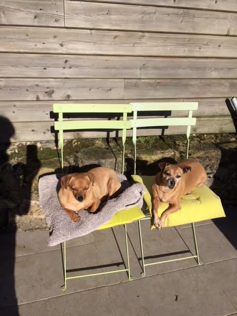 CLARINETTE - Femelle croisée pinscher, de petite taille (mini 5kg) - née environ en septembre 2012 - Adoptée par Brigitte (55)  - Page 2 Clarin60