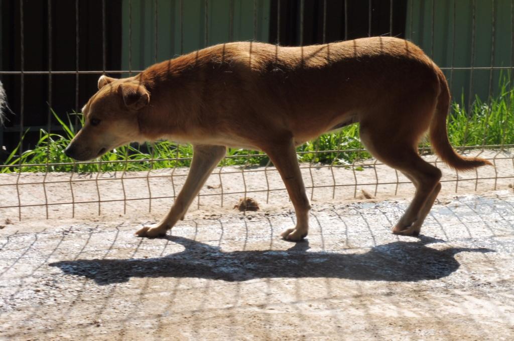 CONFETTI - femelle croisée de taille petite à moyenne, née environ 2013 - Adoptée par Elisabeth (68) - DOIT CHANGER DE FAMILLE ! - Page 2 Confet17