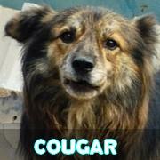 Les séniors en roumanie en un clin d'oeil Cougar18