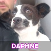 Les loulous handicapés, malades, à la rue ou en urgence vitale en un clin d'oeil Daphne13