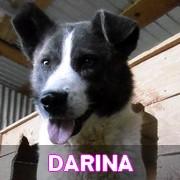 Les séniors en roumanie en un clin d'oeil Darina48