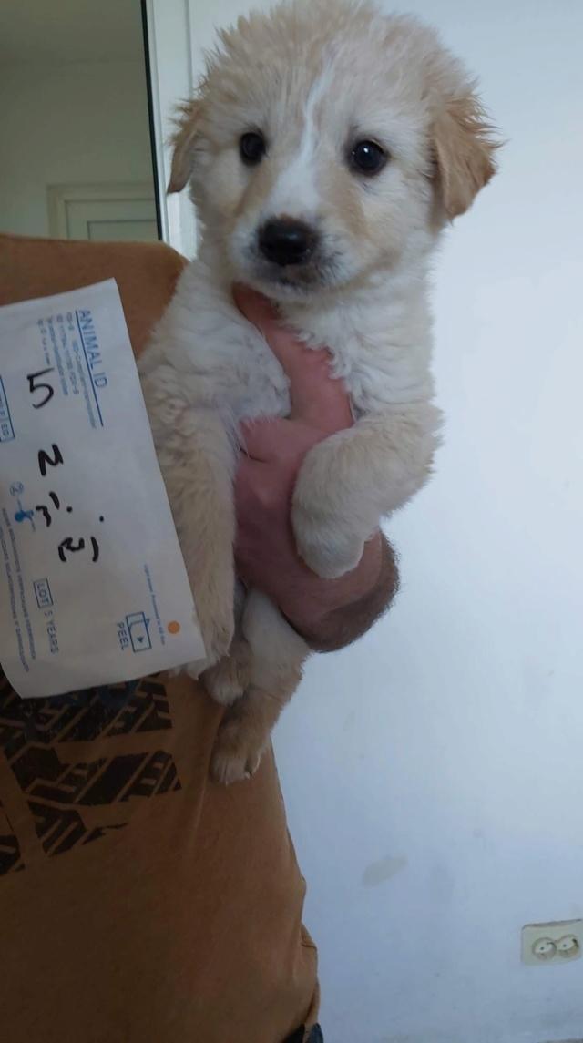 CHARLIE (ex DECEMBER) - chiot mâle, de taille moyenne à l'âge adulte, né environ en février 2020 - ADOPTE PAR LINDA (62) Decemb11