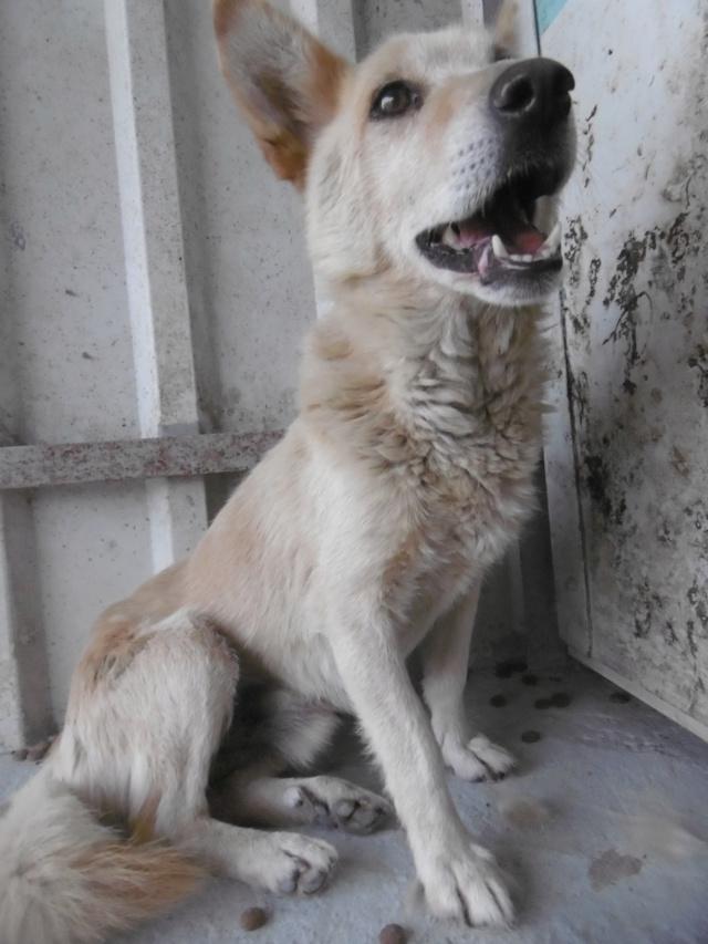 DOUDOU - mâle, croisé de taille petite - né environ en 2009 - REMEMBER ME LAND Doudou21