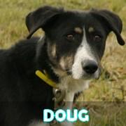 Association Remember Me France : sauver et adopter un chien roumain Doug13