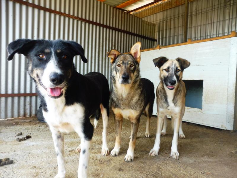 LUPI !! + de 3 ans de box !! - femelle , née environ en 2010, typée chien loup de sarloos, taille moyenne - REMEMBER ME LAND - Page 2 Doug_l10
