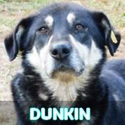 Association Remember Me France : sauver et adopter un chien roumain Dunkin25