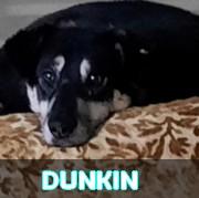 Association Remember Me France : sauver et adopter un chien roumain Dunkin63