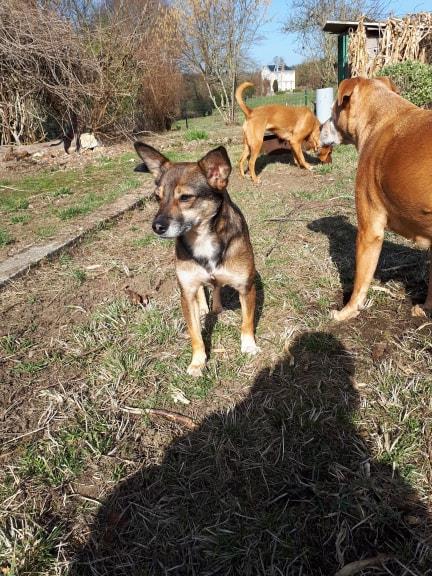 EIKO - femelle, née environ janvier 2016, croisée, taille moyenne (Pascani)- REMEMBER ME LAND - Adoptée par Julie (87) - Page 3 Eiko310