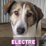 Les adultes de taille moyenne en Roumanie en un clin d'oeil Electr72
