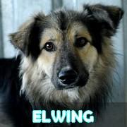 Les adultes de taille moyenne en Roumanie en un clin d'oeil Elwing18